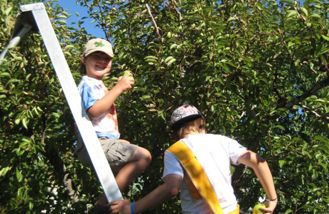 NWHarvest_Gleaning fruit for food banks