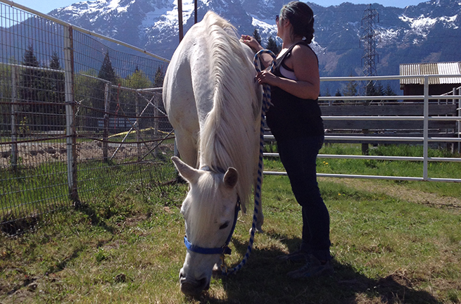Tulalip Cares Recipient for 2015, Horses Healing Hero's.